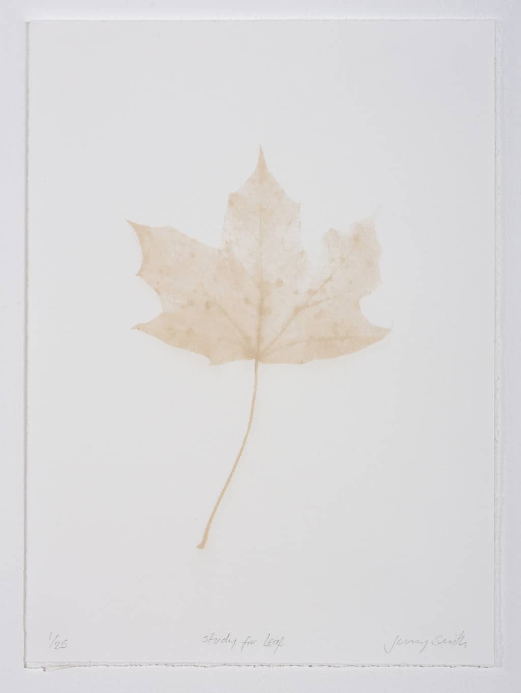 Study for Leaf (2018) Laser engraved print on somerset paper, 21 x 15 cm, Edition of 25